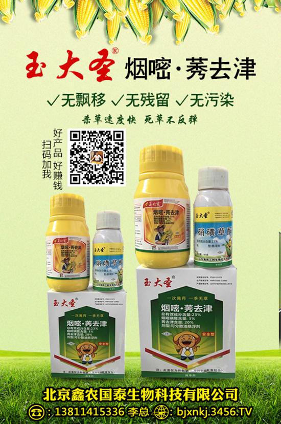 玉米苗主要害虫有哪些 防治方法 防治措施